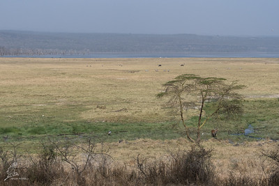 Overview of southern part of Lake Nakuru NP