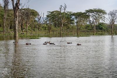 Local fisherman & Hippopotamus