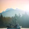 Salmon Seas