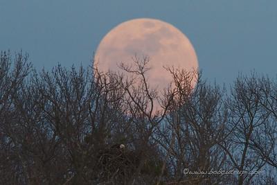 Moonrise behind the Eagles Nest at the Manasquan Reservoir, NJ.