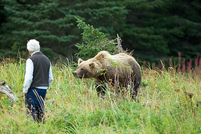 Local resident says hello to Mama Brown Bear!