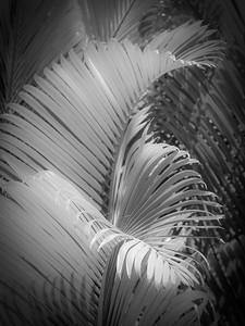 13 Palms - No. 1