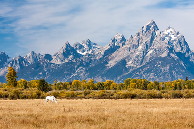 'Denizen' - Grand Tetons, Wyoming