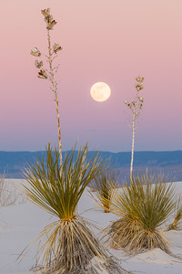 'Yucca Moon' - White Sands National Monument, New Mexico