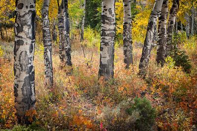 'Trunks' - Gros Ventre, Wyoming, USA