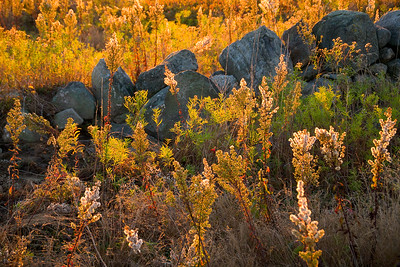 'Autumn Frost' - Union, Maine, USA
