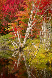 'Scraggy' - Pemaquid Point, Maine, USA