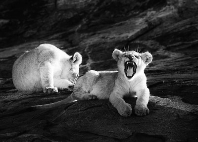 Infrared Cubs