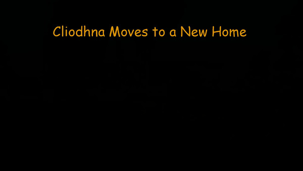 161229 Cliodhna Moves to a New Home - Segment 1