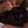 176/366 Kitty Cuddles