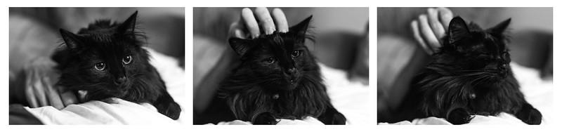 264/366 Happy Kitty Short Photo Story
