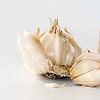 86/366 Garlic
