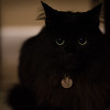 305/366 Halloween is a very spooky day, especially for a black kitty