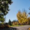 336/366 UC Davis Arboretum