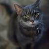 263/366 Sweet Kitty
