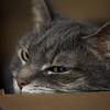 320/366 Sleepy Kitty Loves Her Box