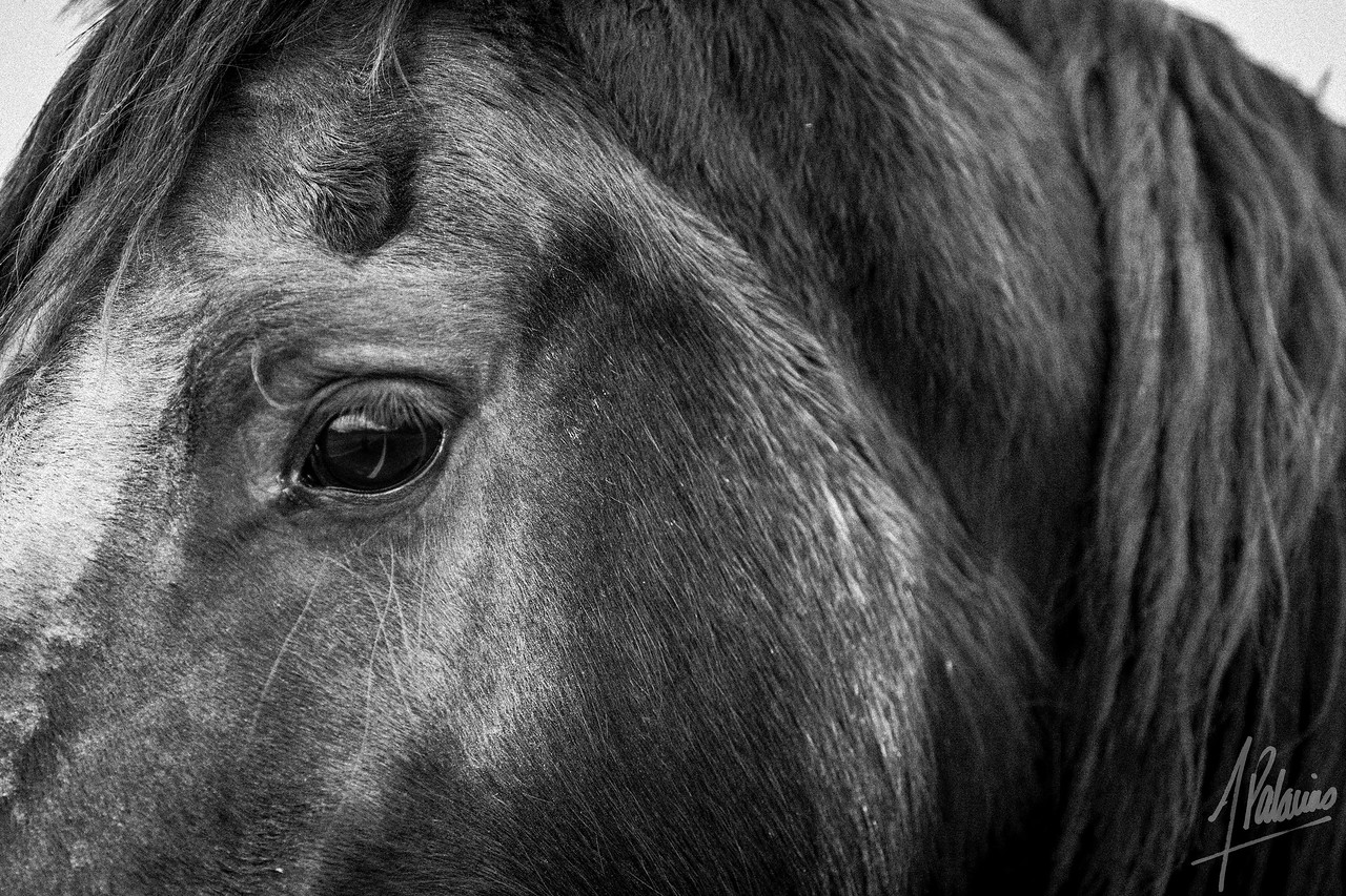 Horse my friend.