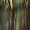 Cypress Dance