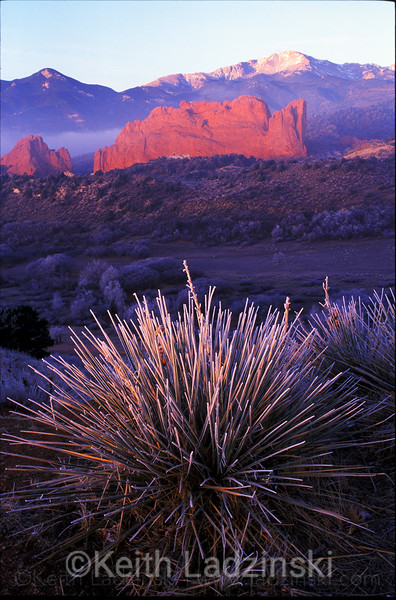 garden of the gods, yucca bush and frist, sunrise