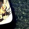 dog_boat