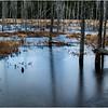 Adirondacks Lake Durant November 2015 Frozen Pond 4