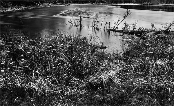 Adirondacks Long Lake November 2015 Wetlands at Sabattis Road 21 BW