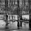 Adirondacks Lake Durant November 2015 Frozen Pond 7 BW