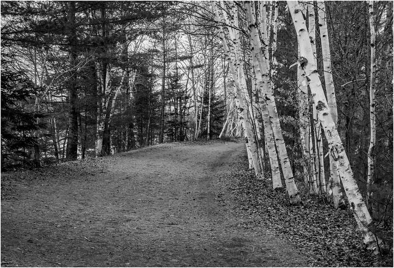 Adirondacks Lake Durant November 2015 Birch Road BW