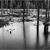 Adirondacks Lake Durant November 2015 Frozen Pond 4 BW