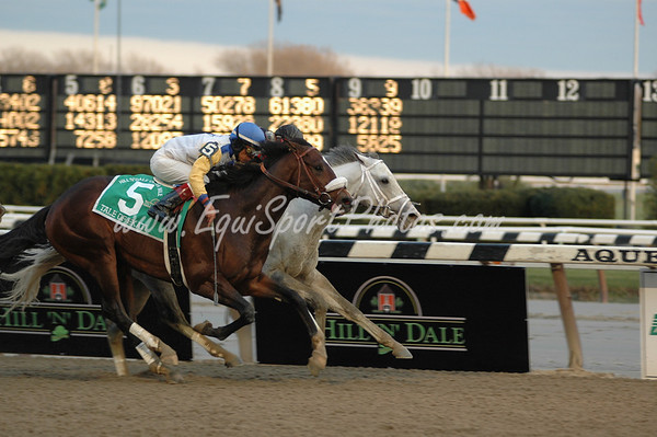 Harlem Rocker wins the Hill N' Dale Cigar Mile by a nose, but is disqualified and placed second, and Tale of Ekati (5) is moved up to first.  Aqueduct, November 29, 2008.  DB