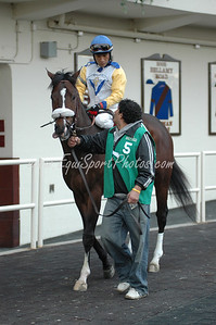 Tale of Ekati in the paddock before the Hill N' Dale Cigar Mile at Aqueduct, November 29, 2008.  Edgar Prado up.  DB