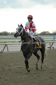Old Fashioned after winning the Remsen at Aqueduct, November 29, 2008.  Ramon Dominguez up.  DB
