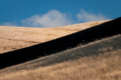 Northern California hillside with partial burn.