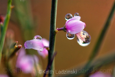 water droplets on flower sout hafrica