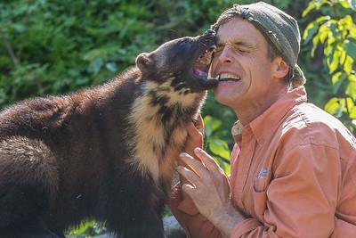 Face time. Wolverine with Steve Kroeschal at the Kroeschal Wildlife Refuge near Haines, Alaska