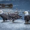 Eagle Action 10/24/16 - 20