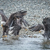Eagle action 10/27/16 - 14