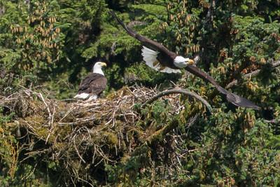 Nest action