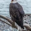 Eagle Action 10/24/16 - 23