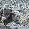 Eagle action 10/27/16 - 13