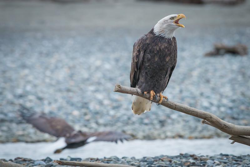 Eagle Action 10/24/16 - 24