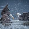 Eagle Action 10/24/16 - 2