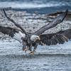 Shiva Eagle