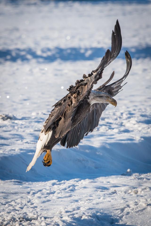 Eagle jumping jacks?