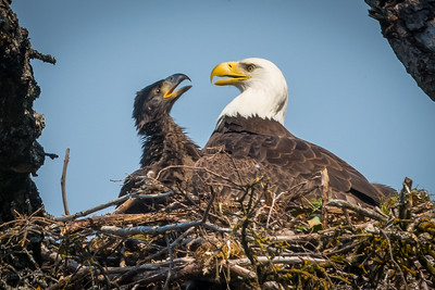 Nest life