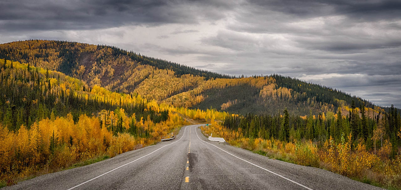We are on the road to explore the Denali Highway and the Denali Road into the park. On the first day out the rain finally cleared and revealed unparalleled foliage fantasies in the Tetlin Wildlife Refuge.