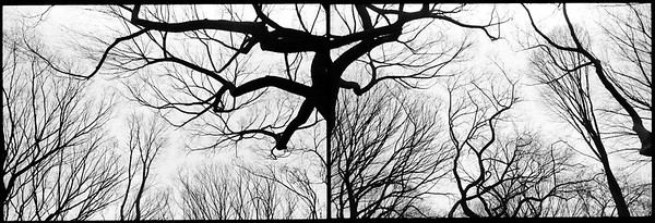 Diptych, Central Park, New York City 2001.