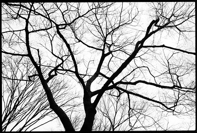 Central Park, New York City, 2001.