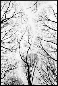 Central Park, New York City 2001.