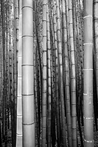 Arashiyama Bamboo Grove, Kyoto, 2019.